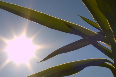 Yucca Palme Pflege - pflege im frühjahr